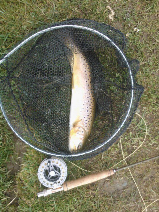 2lb Brownie taken on the Dry fly April 2013