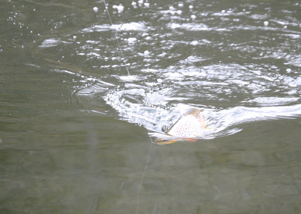 Crystal Clear water helps bring the Trout to the Net